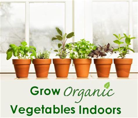 9 vegetables to grow indoors vegetables indoors