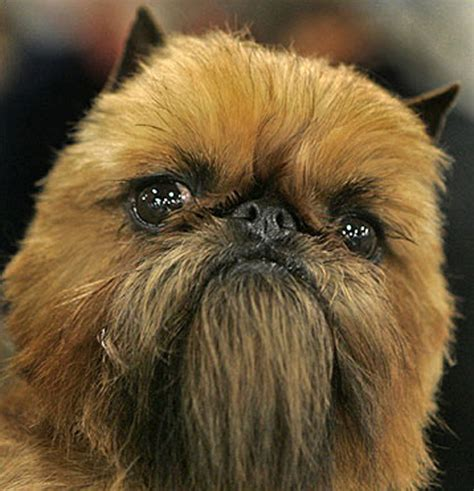 chewbacca puppy i you so much right now hormones living hell
