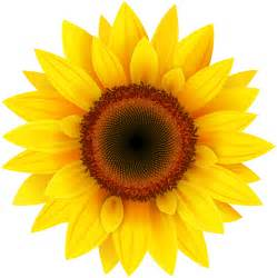 Sunflower Outline Png by Sunflower Png Clipart Picture Gallery Yopriceville High Quality Images And Transparent Png