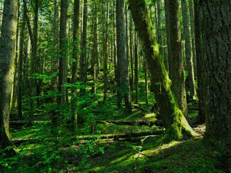 deep forest green pin deep green forest siberia 3552 high resolution