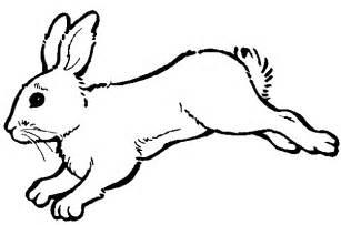 coloriage lapin dans le jardin