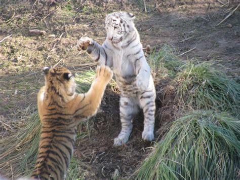 imagenes vectoriales animales gratis imagenes de animales salvajes gratis imagui