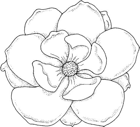 coloring pages of real flowers real flower coloring pages best coloring pages