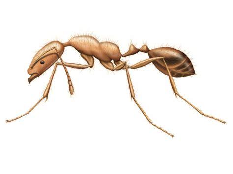 carpenter ants pest control and extermination services