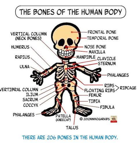 imagenes realistas del cuerpo humano imagenes del cuerpo humano related keywords suggestions