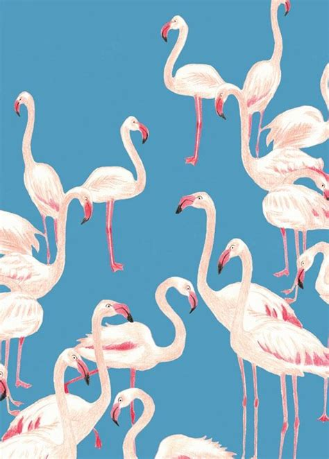 flamingo wallpaper pattern 162 best images about flamingo on pinterest pranks for