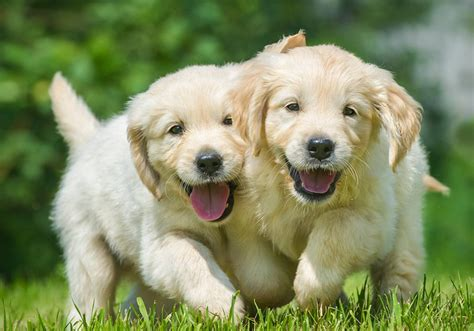 happy puppies website why nature and wildlife amazes me dejorden the official website of de jorden