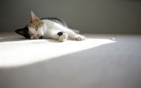 comforting cat high quality picture of cat photo of home comfort