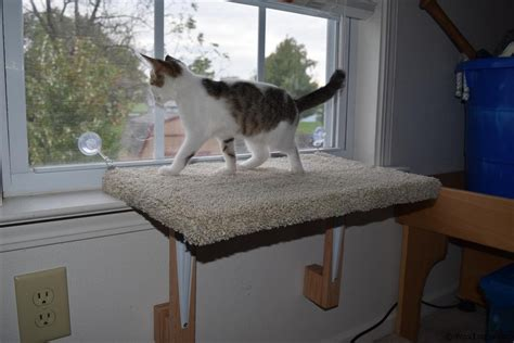 cat window bed cat window perch woodlogger
