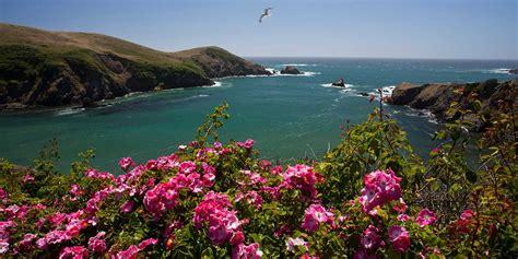 botanical gardens fort bragg ca festival of lights mendocino coast botanical gardens visit california