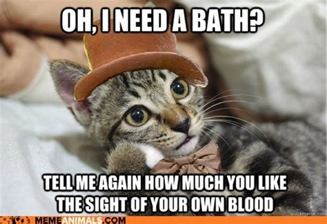 Bath Meme - do cats need baths