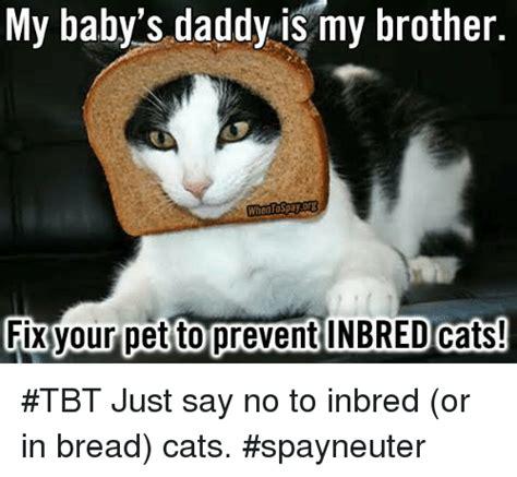 Cat In Bread Meme - 25 best memes about in bread cat in bread cat memes