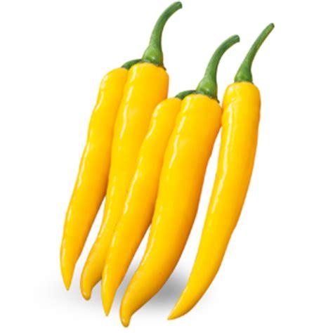 come coltivare il peperoncino in vaso come coltivare il peperoncino scopri come scegliere la