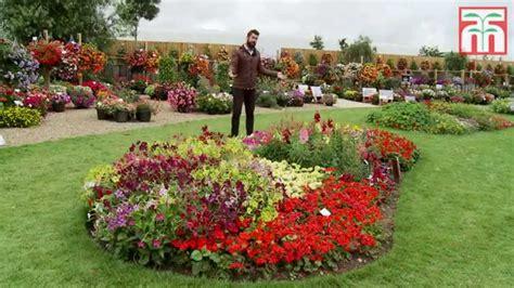 brighten  garden   annual bedding plants youtube