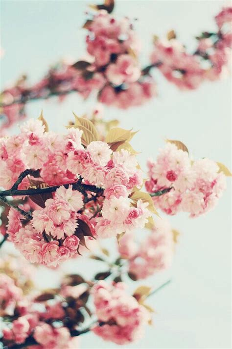 wallpaper girly flowers background phone flower wallpaper girly image