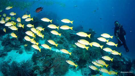 dive raja at diving mioskon raja at indonesia