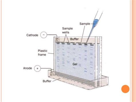diagram of electrophoresis gel electroporosis