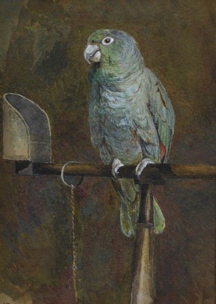 Polly George Does Birds by 1409 Best Parrots In Images On Bird