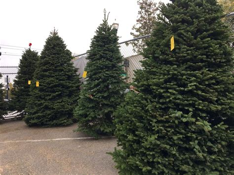 buy a christmas tree do good at delancey street s new