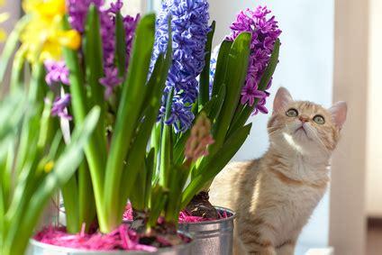 alimenti per gatti on line alimenti per gatti con ingredienti biologici