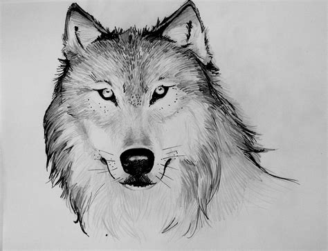 Drawing Wolf by Almost A Mostly A Ghost Wolf Drawings