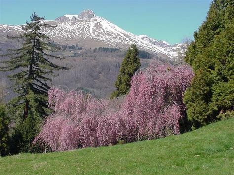 ciliegio fiorito riserva naturale parco burcina felice piacenza