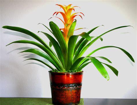 indoor flowering plants low maintenance indoor flowering plants garden design ideas
