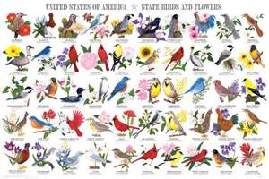 list of state flowers state birds and flowers poster by feenixx publishing