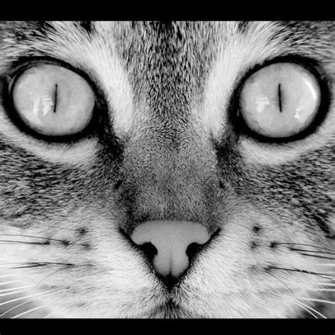 black and white animals black and white animals pictures