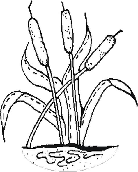 Cattails Coloring Pages | cattails free printable woods and hunting coloring pages