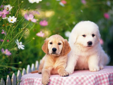 cute pictures of puppies 1 best pictures and wallpapers of dogs and puppies nice