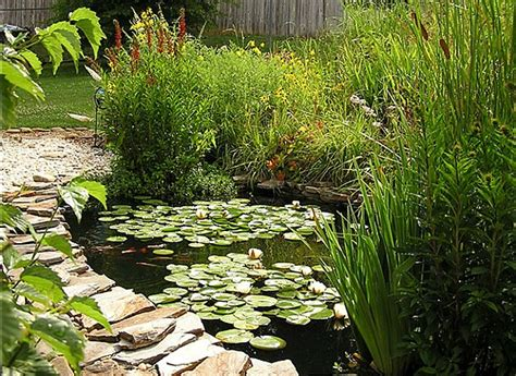 water saving landscaping lawn care tips consumer