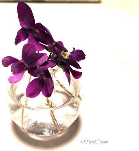 fiori violette foto come usare violette come segnaposto donne magazine
