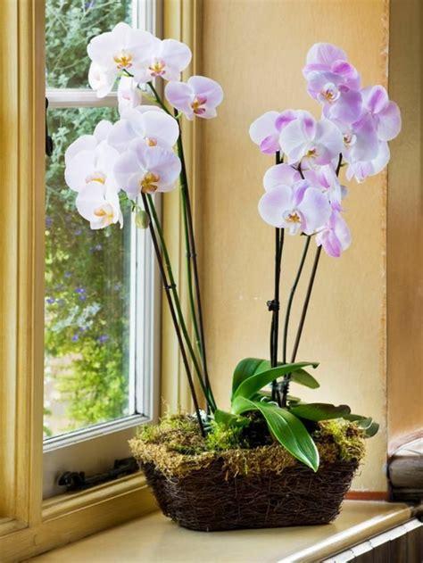 Wie Pflegt Eine Orchidee 4794 by Tipps Zur Orchidee Pflege Wie 252 Berdauert Die Orchidee
