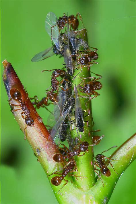 bettdecken ökotest kleine rote ameisen im garten 28 images kleine rote