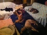 Http www meetup com rottweiler group