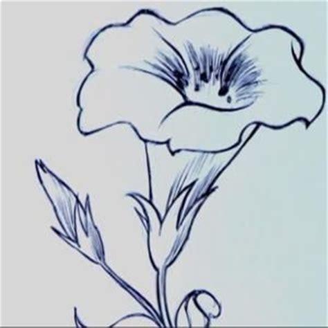 fiori da disegnare facili 17 migliori idee su arte con matita su disegni