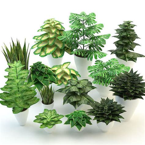 model forest flowers  plants set cgtrader
