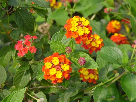 plantanswers plant answers gt 12 months of watersaver landscape color september