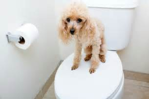 dogs going to the bathroom in the house new dog not going to the bathroom thriftyfun