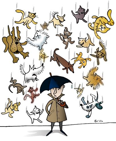 it s raining cats and dogs picture idioms raining cats and dogs wil s world of words