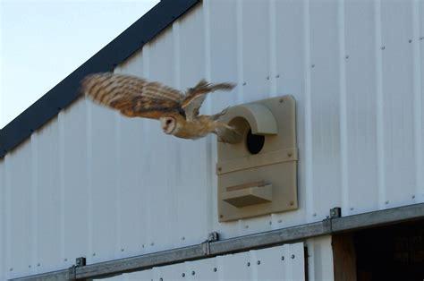how to make an owl box how to build or buy a barn owl nest box barn owl box company