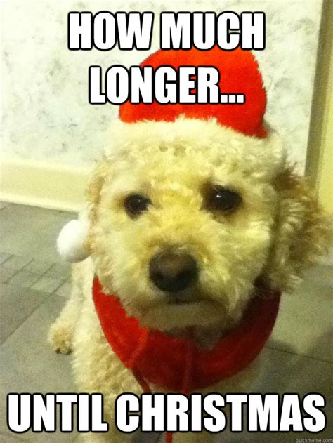 how much longer until christmas molly dog quickmeme