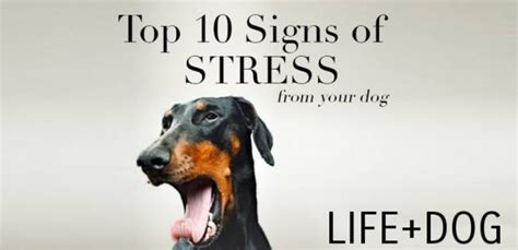 signs of stress in dogs top ten signs of stress in your and