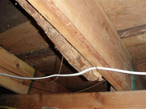 Repairing Wood Damage In A Crawl Space