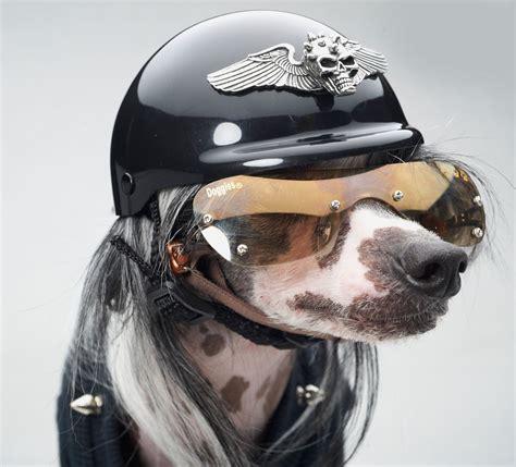 puppy helmet biker accessories winged spiked skull helmet