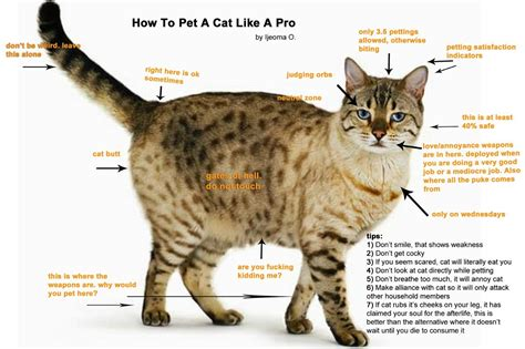 how to a pet how to pet a cat like a pro the establishment