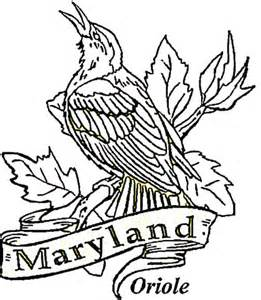 baltimore oriole of maryland coloring page super coloring