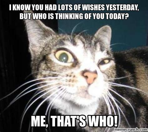 Cat Birthday Memes - belated birthday cat meme