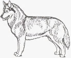 husky coloring pages siberian huskies coloring pages